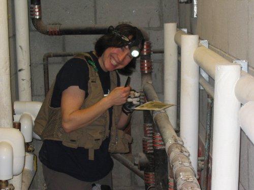 Expert is looking at a glue trap at Estrella Jail.